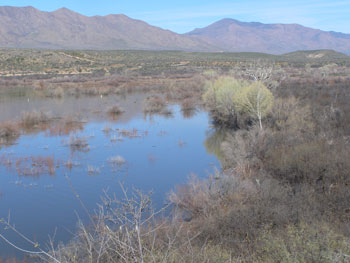 Tonto Breeding Area